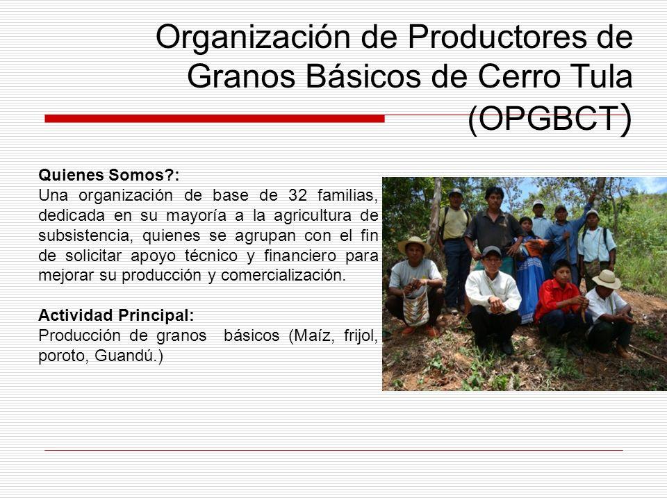 Organización de Productores de Granos Básicos de Cerro Tula (OPGBCT ) Quienes Somos?: Una organización de base de 32 familias, dedicada en su mayoría