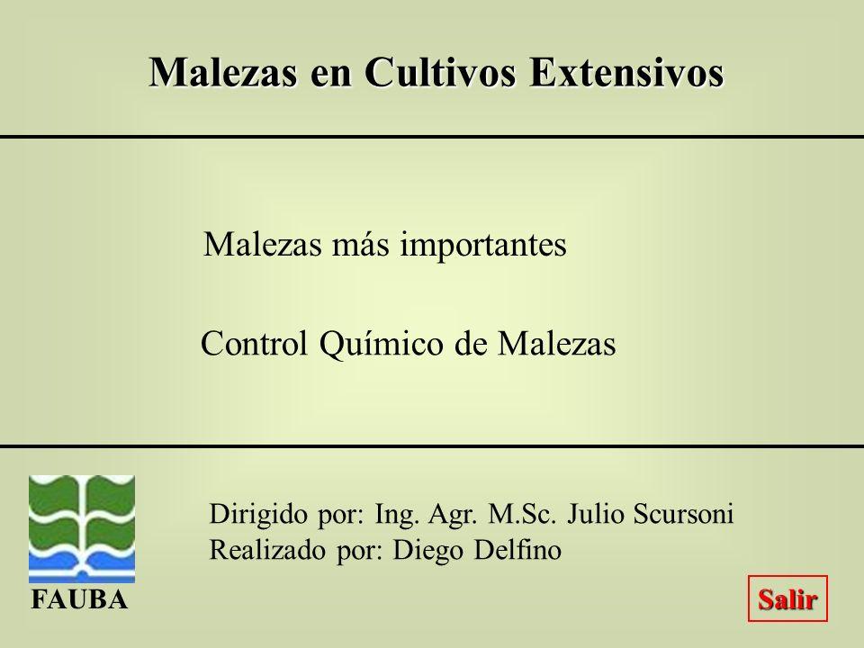 Control de Malezas en Postemergencia Maíz Sig. Ant.