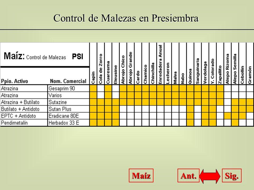 Control de Malezas en Presiembra Maíz Sig. Ant.