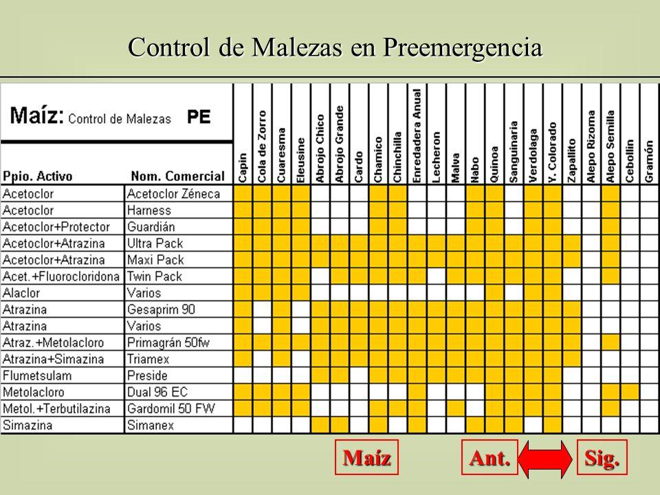 Control de Malezas en Preemergencia Maíz Sig. Ant.