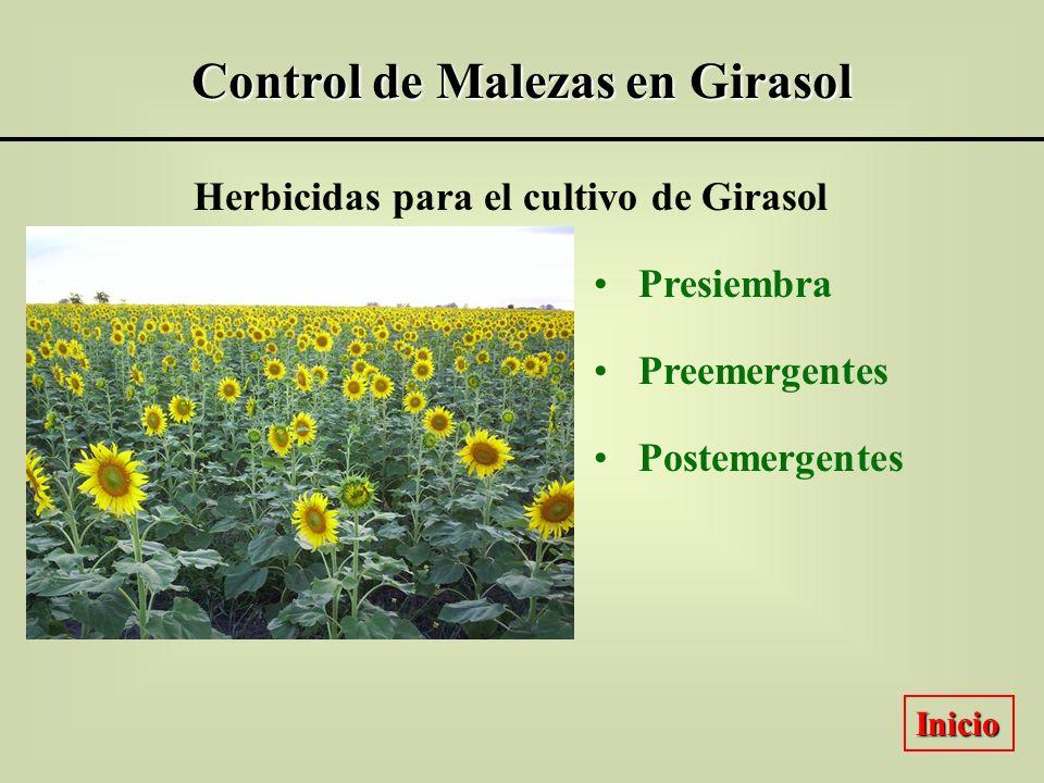 Control de Malezas en Girasol Herbicidas para el cultivo de Girasol Presiembra Preemergentes Postemergentes Inicio