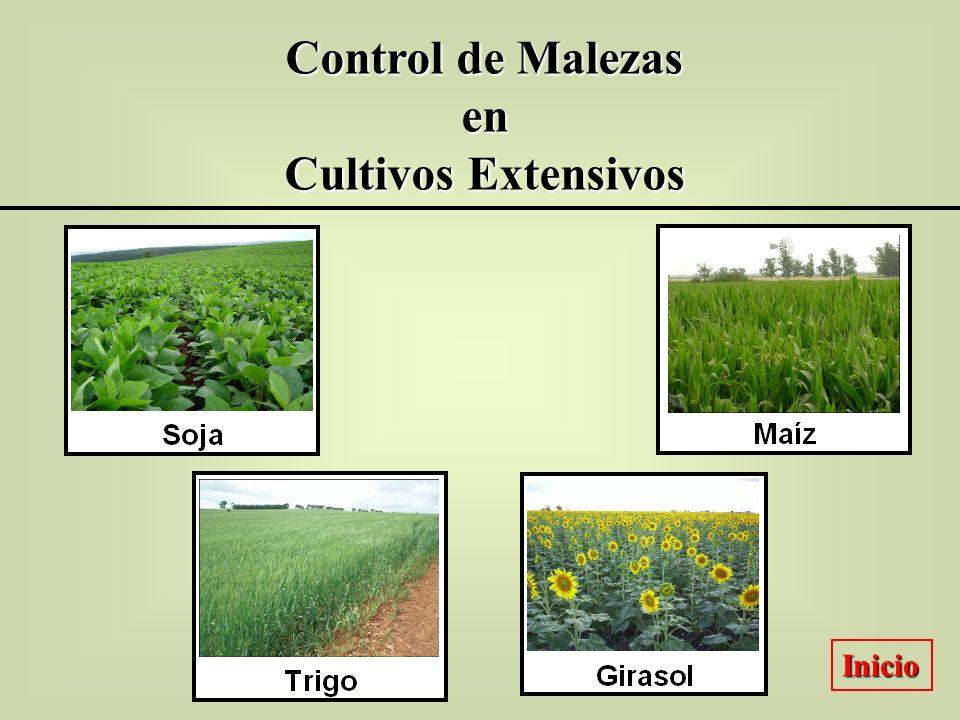 Control de Malezas en Cultivos Extensivos Inicio