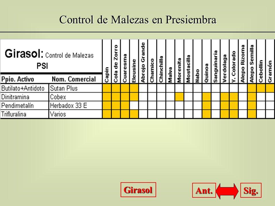 Control de Malezas en Presiembra Girasol Sig. Ant.