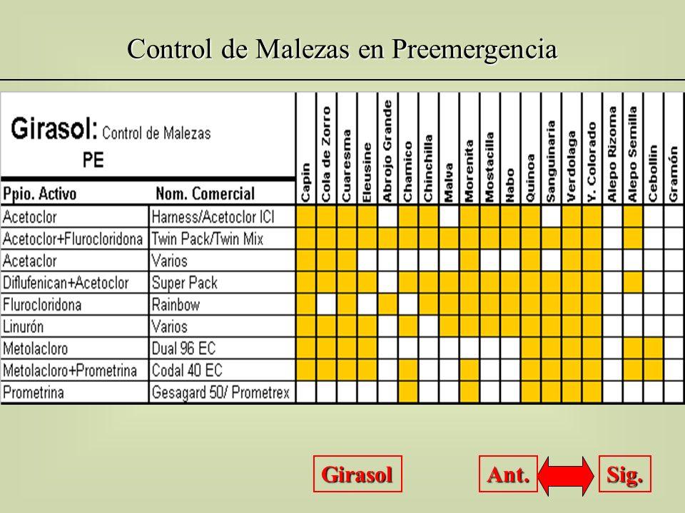 Control de Malezas en Preemergencia Girasol Sig. Ant.