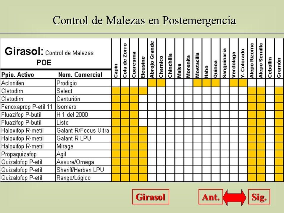 Control de Malezas en Postemergencia Girasol Sig. Ant.