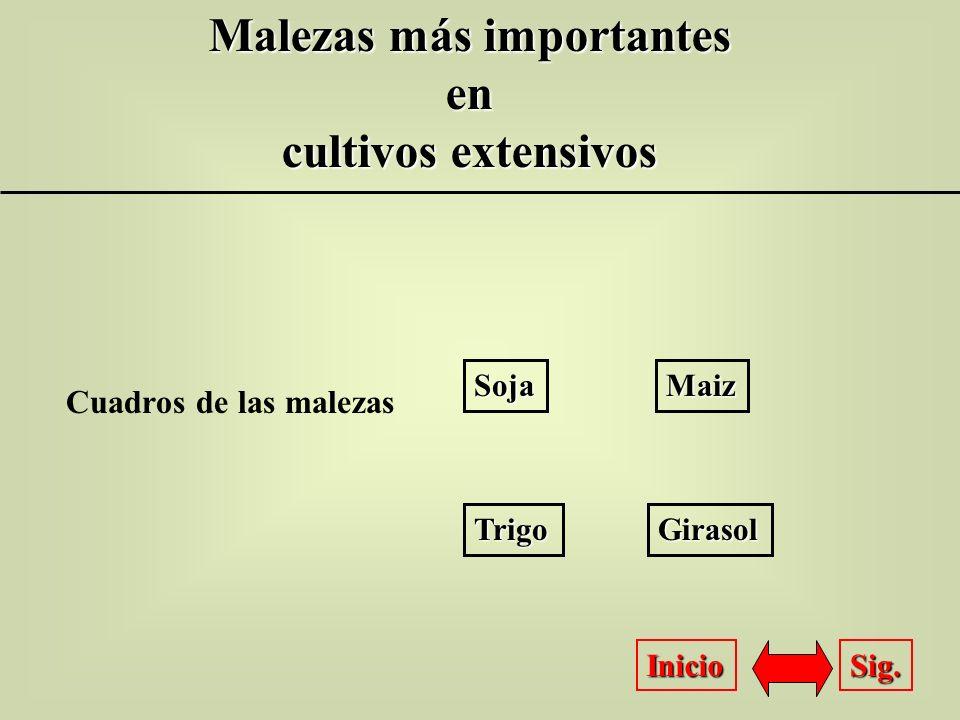 Malezas más importantes en en cultivos extensivos Inicio Sig. Cuadros de las malezas Girasol Trigo Maiz Soja