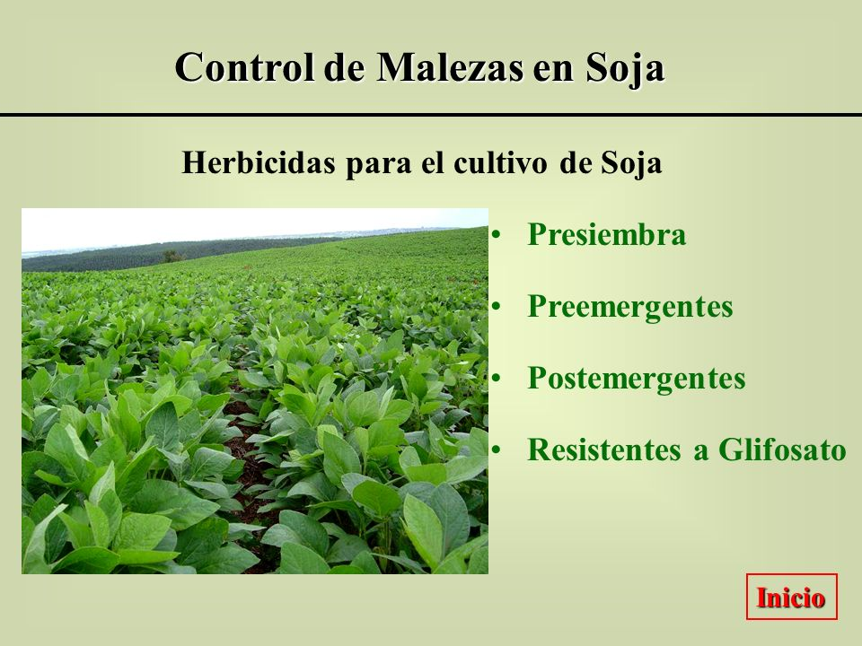 Control de Malezas en Soja Herbicidas para el cultivo de Soja Presiembra Preemergentes Postemergentes Resistentes a Glifosato Inicio
