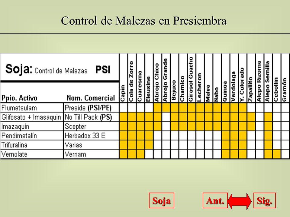 Control de Malezas en Preemergencia Soja Sig. Ant.