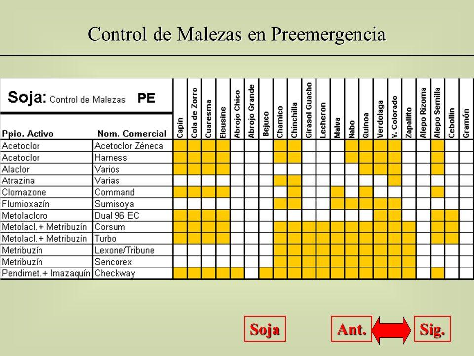 Control de Malezas en Preemergencia Trigo Sig. Ant.