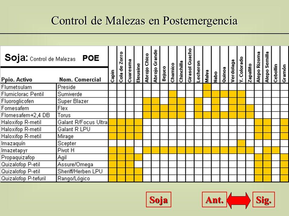 Control de Malezas en Postemergencia Trigo Sig. Ant.