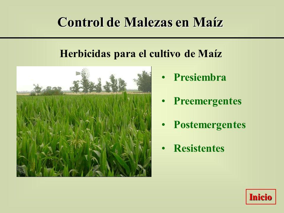Control de Malezas en Maíz Herbicidas para el cultivo de Maíz Presiembra Preemergentes Postemergentes Resistentes Inicio