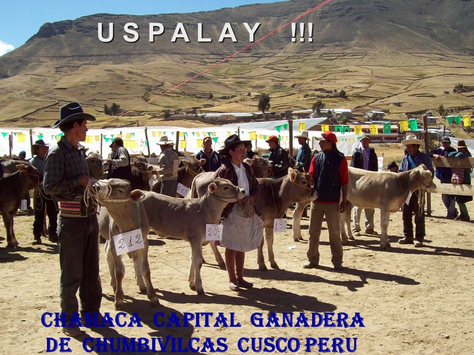 chamaca capital ganadera de Chumbivilcas Cusco PERU U S P A L A Y !!!