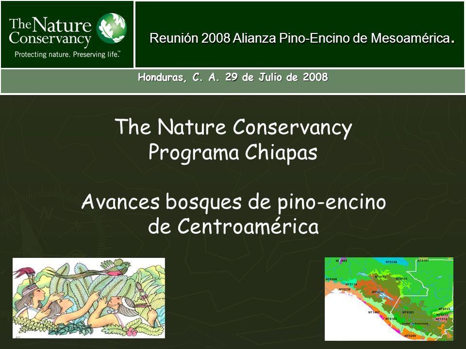 The Nature Conservancy Programa Chiapas Avances bosques de pino-encino de Centroamérica Honduras, C. A. 29 de Julio de 2008 Reunión 2008 Alianza Pino-