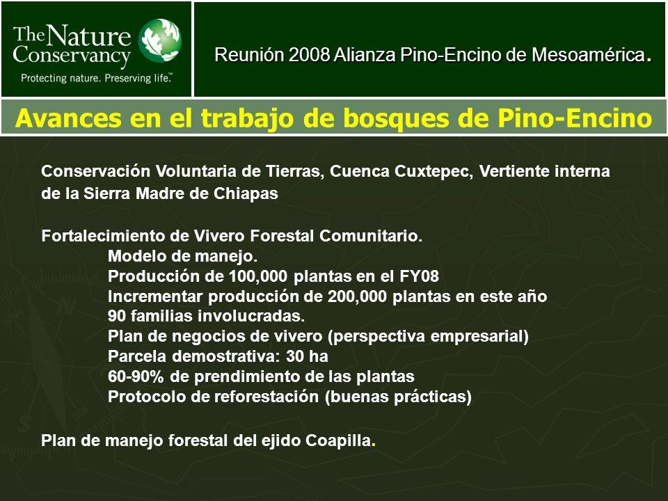 Reunión 2008 Alianza Pino-Encino de Mesoamérica. Avances en el trabajo de bosques de Pino-Encino Conservación Voluntaria de Tierras, Cuenca Cuxtepec,