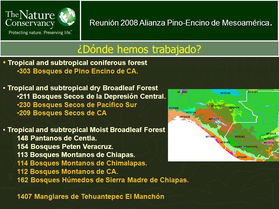 Reunión 2008 Alianza Pino-Encino de Mesoamérica. ¿Dónde hemos trabajado? Tropical and subtropical coniferous forest 303 Bosques de Pino Encino de CA.