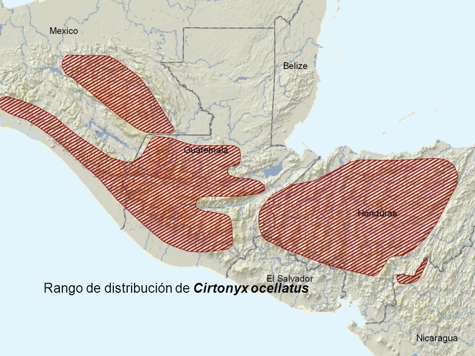 Rango de distribución de Cirtonyx ocellatus