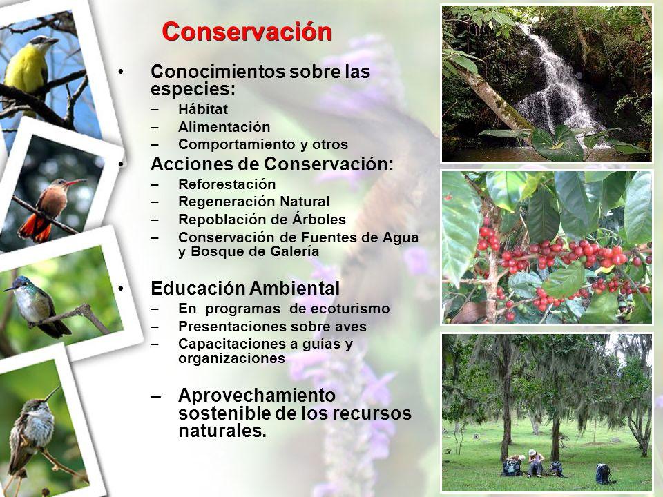 Conservación Conocimientos sobre las especies: –H–Hábitat –A–Alimentación –C–Comportamiento y otros Acciones de Conservación: –R–Reforestación –R–Rege