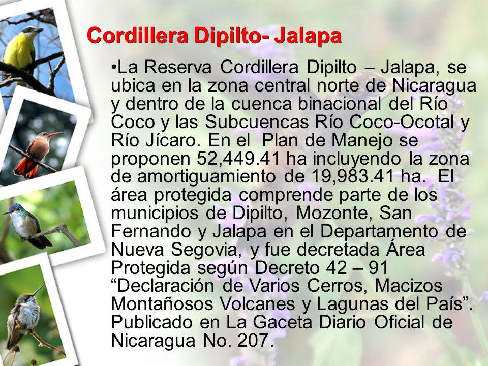 Cordillera Dipilto- Jalapa La Reserva Cordillera Dipilto – Jalapa, se ubica en la zona central norte de Nicaragua y dentro de la cuenca binacional del
