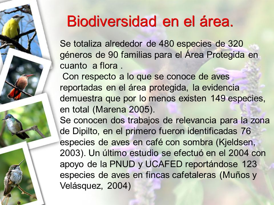 Biodiversidad en el área. Se totaliza alrededor de 480 especies de 320 géneros de 90 familias para el Área Protegida en cuanto a flora. Con respecto a