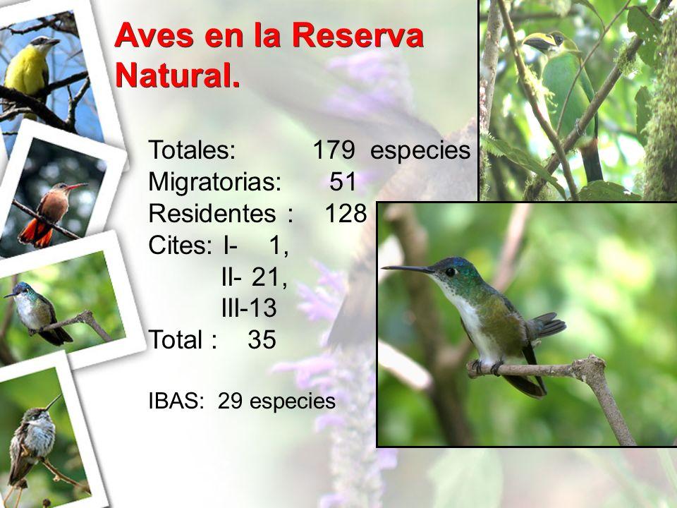 Aves en la Reserva Natural. Totales: 179 especies Migratorias: 51 Residentes : 128 Cites: I- 1, II- 21, III-13 Total : 35 IBAS: 29 especies