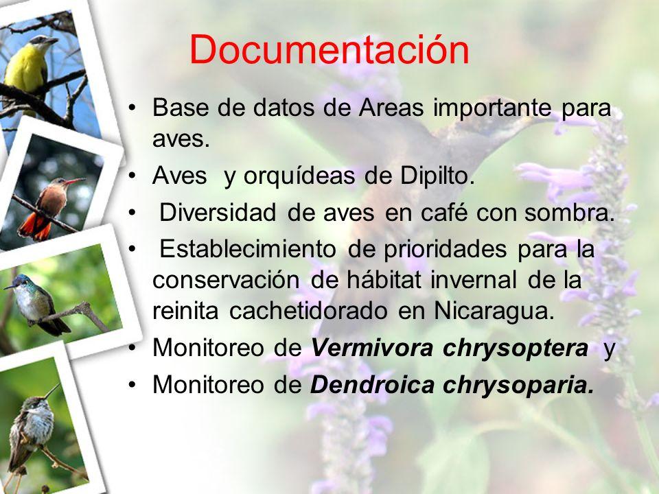 Documentación Base de datos de Areas importante para aves. Aves y orquídeas de Dipilto. Diversidad de aves en café con sombra. Establecimiento de prio
