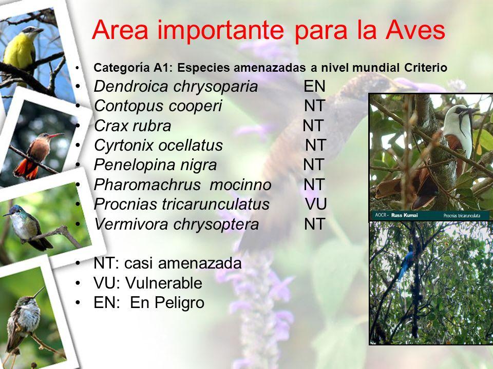 Area importante para la Aves Categoría A1: Especies amenazadas a nivel mundial Criterio Dendroica chrysoparia EN Contopus cooperi NT Crax rubra NT Cyr
