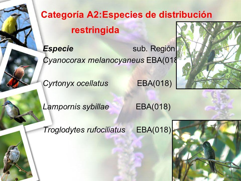 Categoría A2:Especies de distribución restringida Especie sub. Región Cyanocorax melanocyaneus EBA(018) Cyrtonyx ocellatus EBA(018) Lampornis sybillae