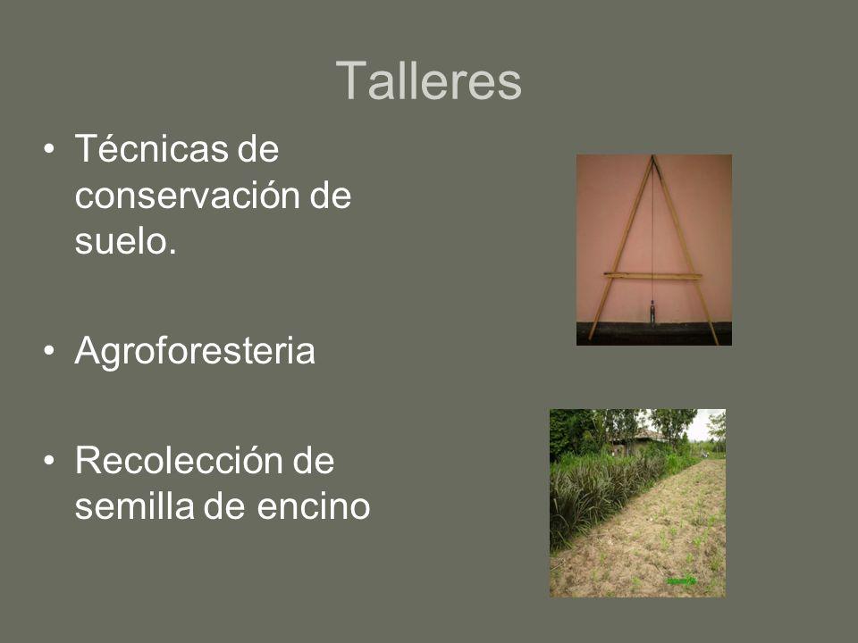 Talleres Técnicas de conservación de suelo. Agroforesteria Recolección de semilla de encino