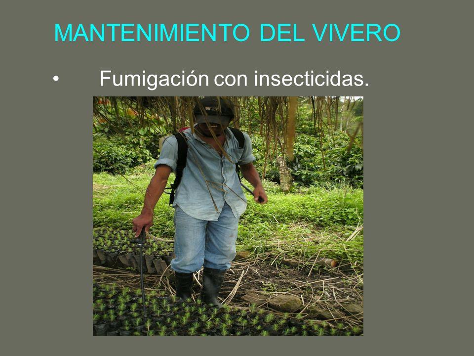 MANTENIMIENTO DEL VIVERO Fumigación con insecticidas.
