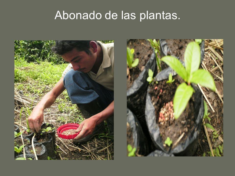 Abonado de las plantas.