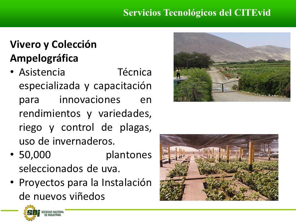 Servicios Tecnológicos del CITEvid Vivero y Colección Ampelográfica Asistencia Técnica especializada y capacitación para innovaciones en rendimientos y variedades, riego y control de plagas, uso de invernaderos.