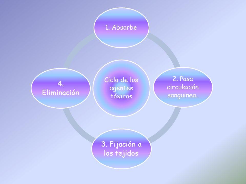 Ciclo de los agentes tóxicos 1. Absorbe 2. Pasa circulación sanguinea. 3. Fijación a los tejidos 4. Eliminación