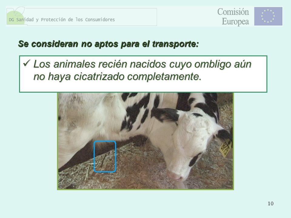 10 Se consideran no aptos para el transporte: Los animales recién nacidos cuyo ombligo aún no haya cicatrizado completamente. Los animales recién naci