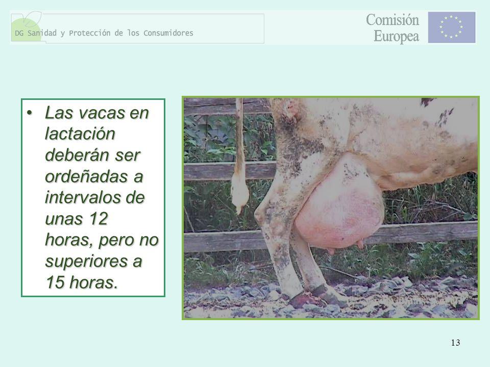 13 Las vacas en lactación deberán ser ordeñadas a intervalos de unas 12 horas, pero no superiores a 15 horas.Las vacas en lactación deberán ser ordeña