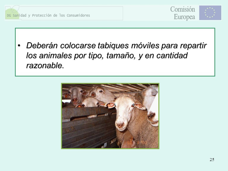 25 Deberán colocarse tabiques móviles para repartir los animales por tipo, tamaño, y en cantidad razonable.Deberán colocarse tabiques móviles para rep