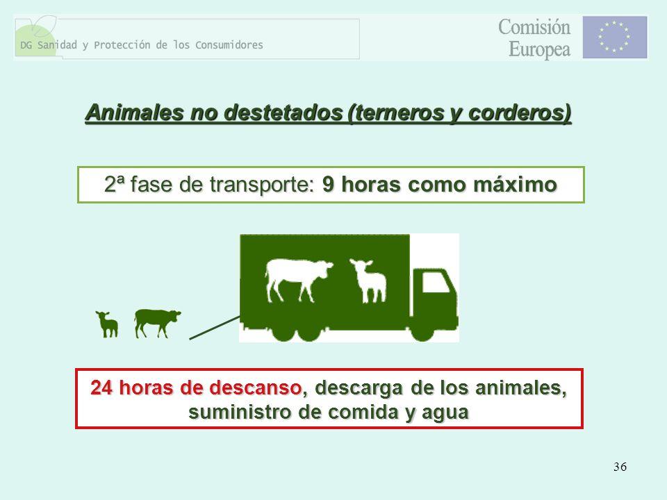 36 Animales no destetados (terneros y corderos) 2ª fase de transporte: 9 horas como máximo 24 horas de descanso, descarga de los animales, suministro