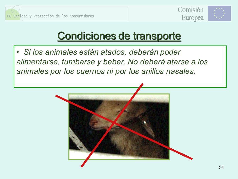 54 Si los animales están atados, deberán poder alimentarse, tumbarse y beber. No deberá atarse a los animales por los cuernos ni por los anillos nasal