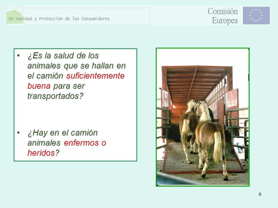 6 ¿Es la salud de los animales que se hallan en el camión suficientemente buena para ser transportados?¿Es la salud de los animales que se hallan en e