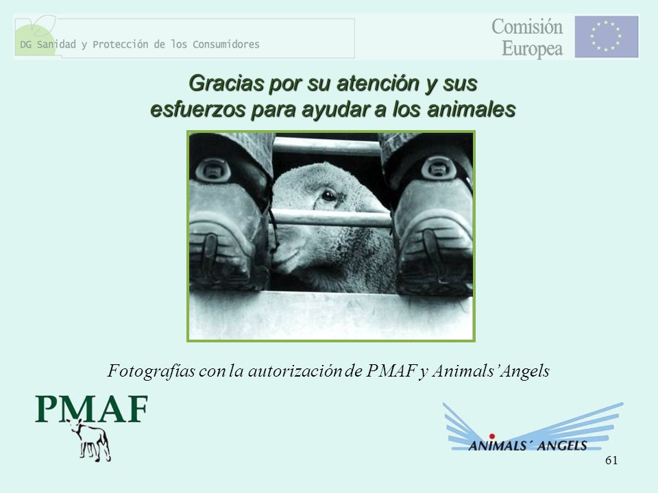 61 Gracias por su atención y sus esfuerzos para ayudar a los animales Fotografías con la autorización de PMAF y AnimalsAngels