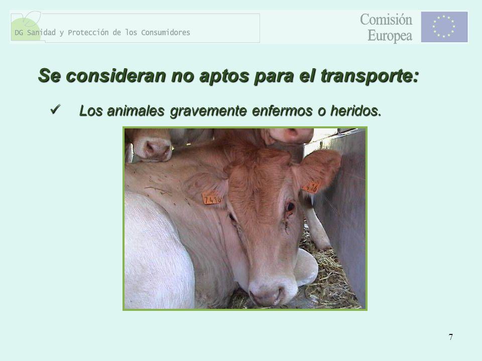 7 Los animales gravemente enfermos o heridos. Los animales gravemente enfermos o heridos. Se consideran no aptos para el transporte: