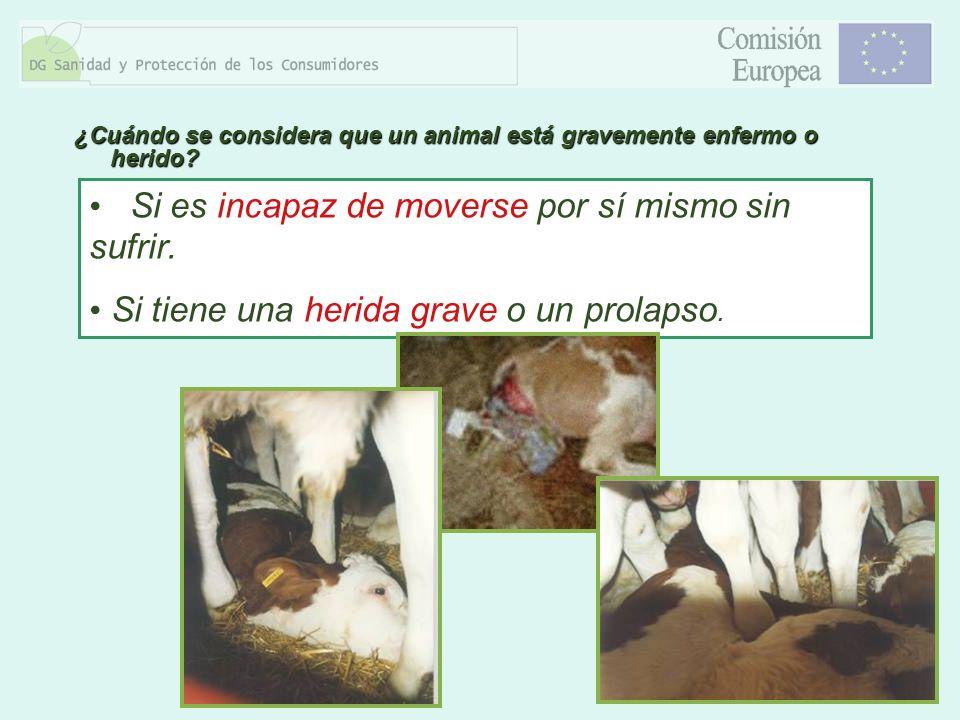 9 Los animales que se hallen en un estado de gestación avanzado y que puedan parir durante el período de transporte.