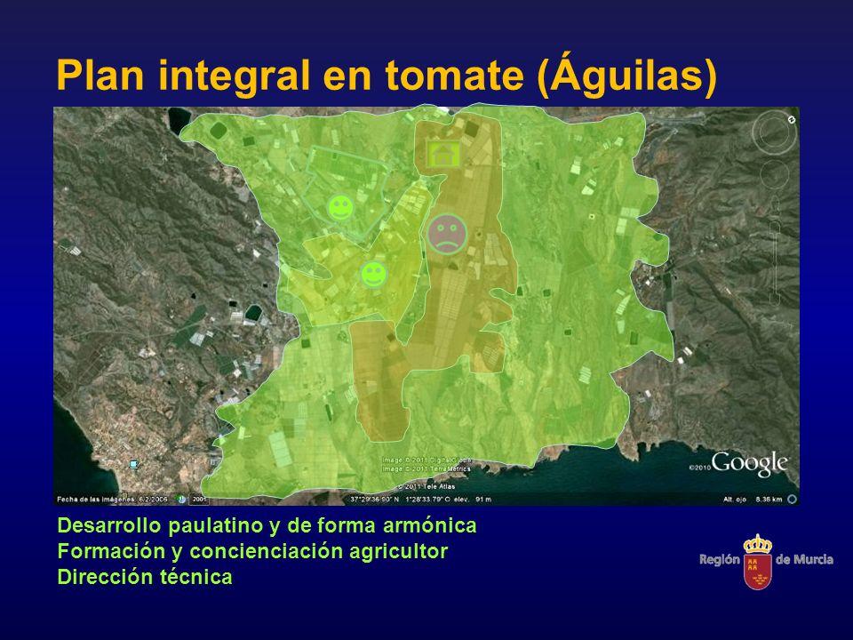 Plan integral en tomate (Águilas) Desarrollo paulatino y de forma armónica Formación y concienciación agricultor Dirección técnica