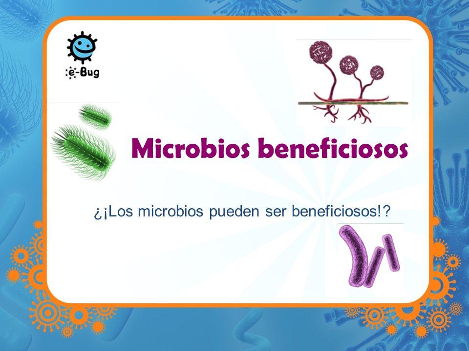 Microbios beneficiosos ¿¡Los microbios pueden ser beneficiosos!?