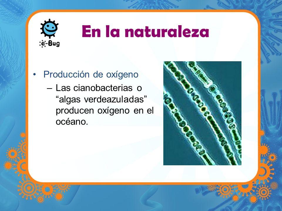 Producción de oxígeno –Las cianobacterias o algas verdeazuladas producen oxígeno en el océano. En la naturaleza