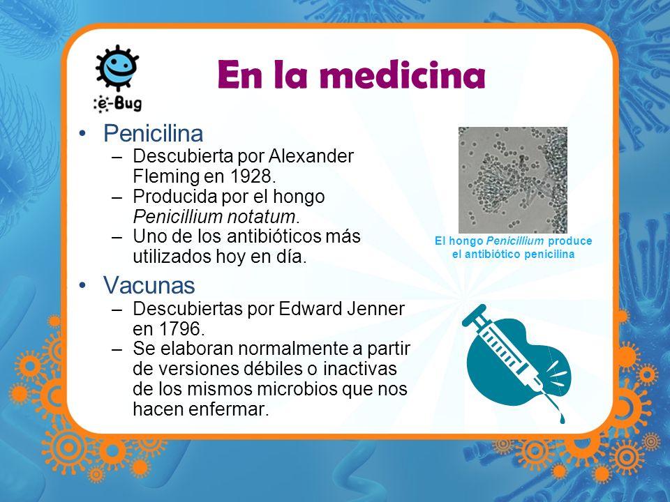 En la medicina Penicilina –Descubierta por Alexander Fleming en 1928. –Producida por el hongo Penicillium notatum. –Uno de los antibióticos más utiliz