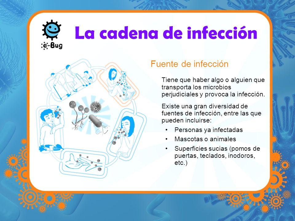 La cadena de infección Fuente de infección Tiene que haber algo o alguien que transporta los microbios perjudiciales y provoca la infección. Existe un