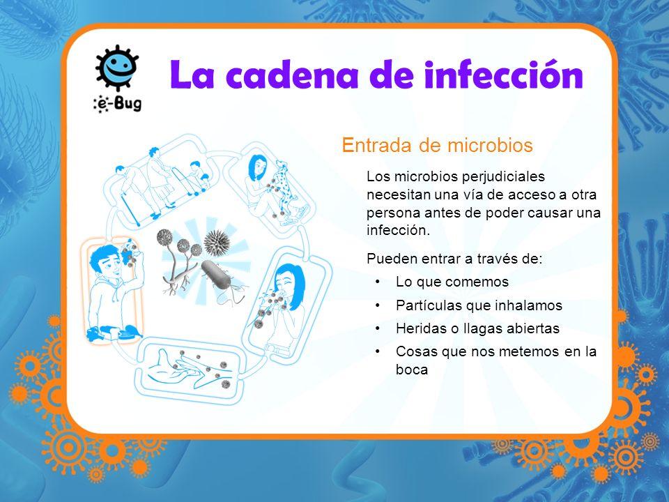 La cadena de infección Entrada de microbios Los microbios perjudiciales necesitan una vía de acceso a otra persona antes de poder causar una infección