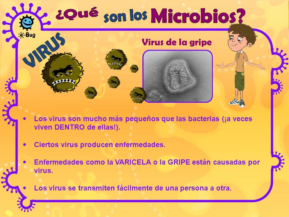 enfermedades que producen las bacterias y los virus:
