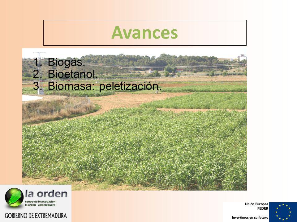 Avances 1.Biogás. 2.Bioetanol. 3.Biomasa: peletización.