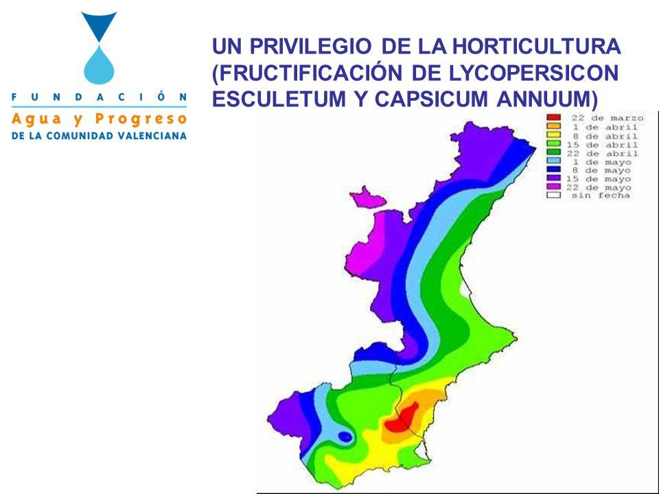 UN PRIVILEGIO DE LA HORTICULTURA (FRUCTIFICACIÓN DE LYCOPERSICON ESCULETUM Y CAPSICUM ANNUUM)
